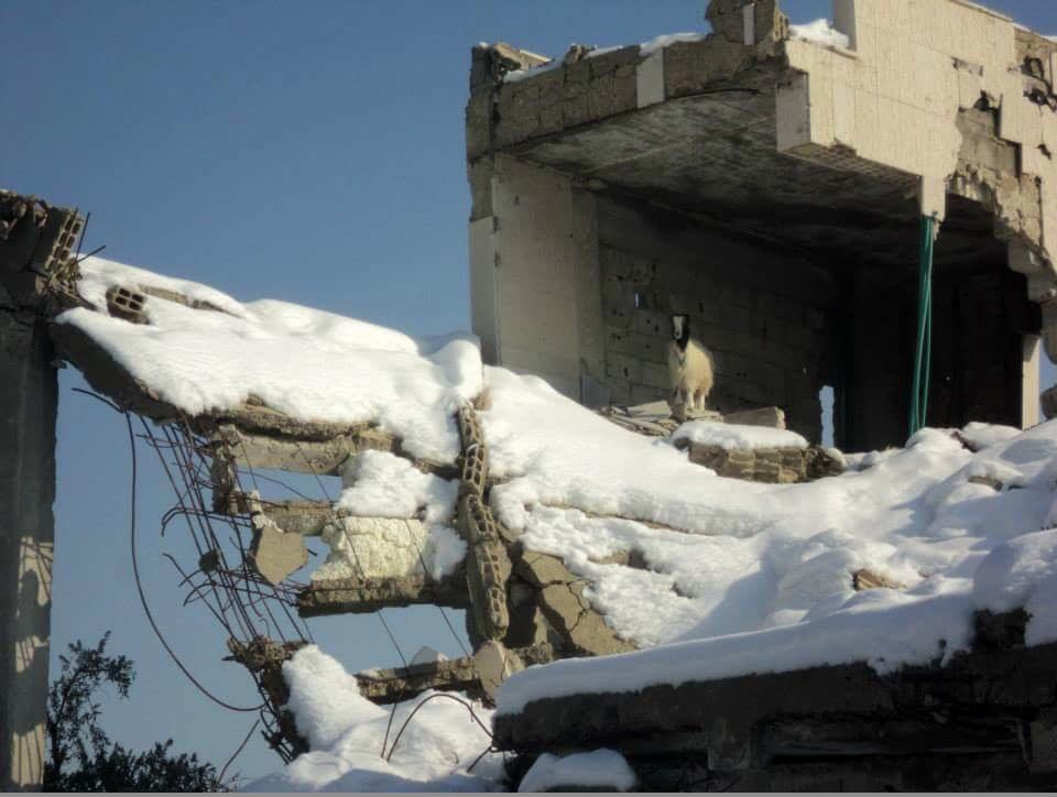 Ein durch den Beschuss von Regierungstruppen zerstörtes Gebäude in Moadamaiyeh. Moadmaiyeh 2015. Foto: Ghassan